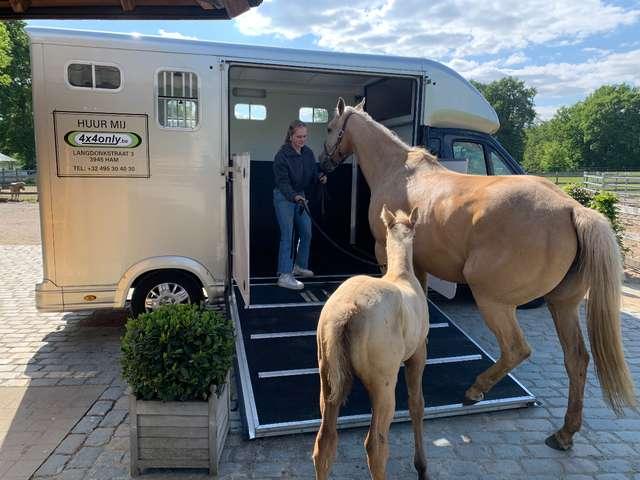 Peugeot Boxer huur transport 2 paarden klein rijbewijs B 150€
